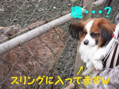 20084153.jpg