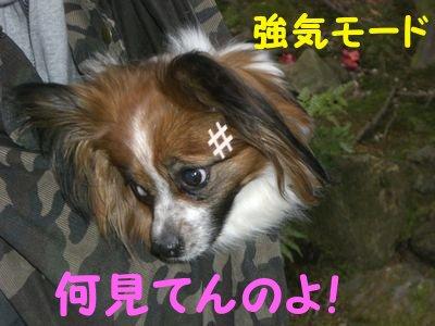 20084154.jpg