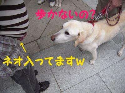 20084158.jpg