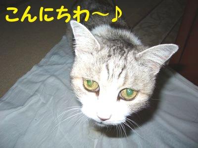 20084162.jpg