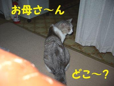 20084164.jpg