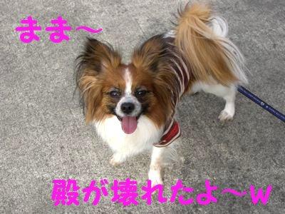20084176.jpg