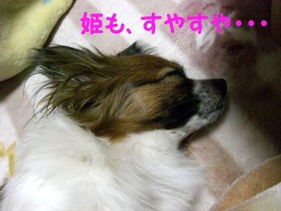 20084182.jpg