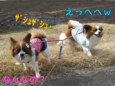 20084239.jpg