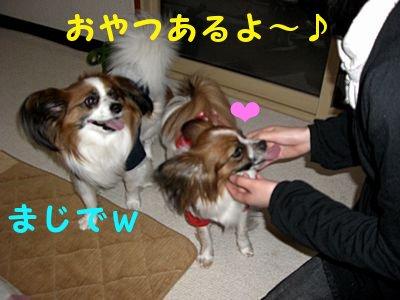 2008467.jpg