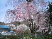 一般部門 作品番号07「春の色」Photo by 柳川