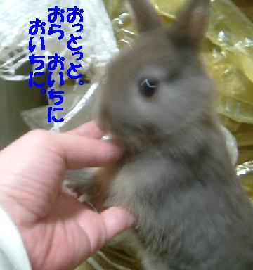 DSCF6683414.jpg