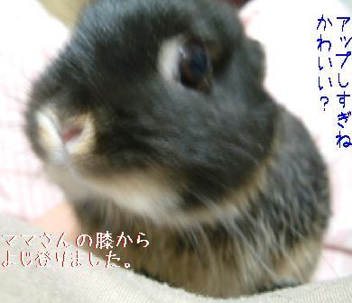 DSCF7078701.jpg