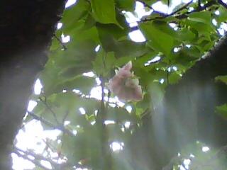3_季節はずれの桜の花が…