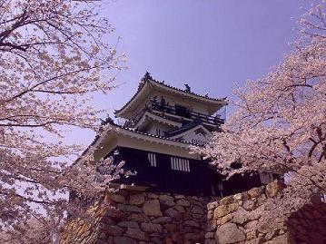浜松城のさくら20080402A