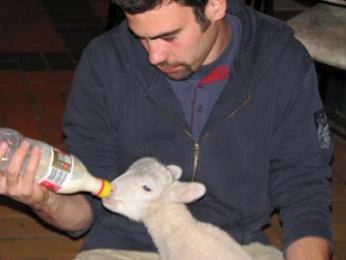 Euro boy feeds lambC
