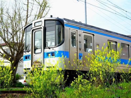 予讃線の電車with線路脇の菜の花(by IXY DIGITAL L3)