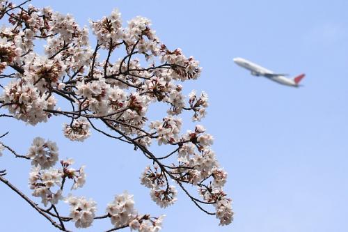 瑞ヶ池公園の桜 with JAL B767-346 JL116(by EF100-400)