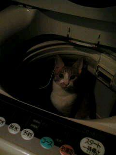 洗濯機にかぎるよ