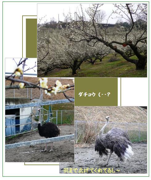 oiwake3.jpg