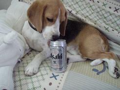 ビールもらったよ
