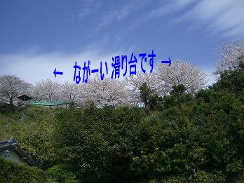 CIMG5784.jpg