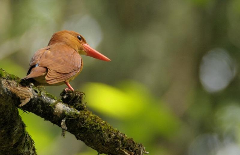 憧れの赤い鳥