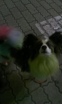 高円寺の犬①