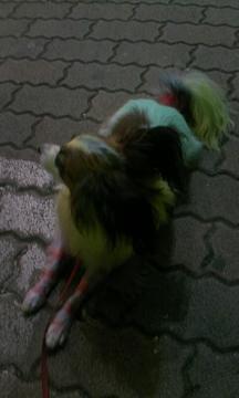 高円寺の犬②