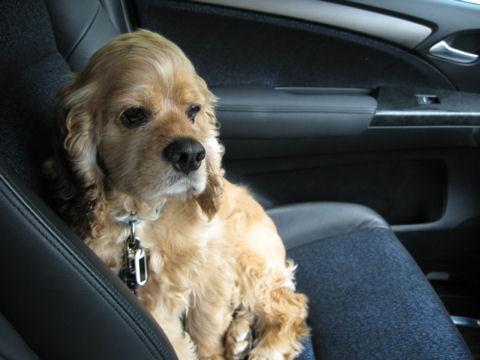 車中のロイ