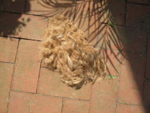 刈られた毛