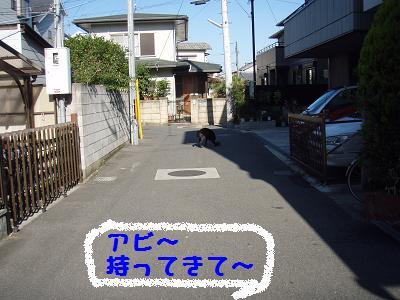 P6130035-1.jpg