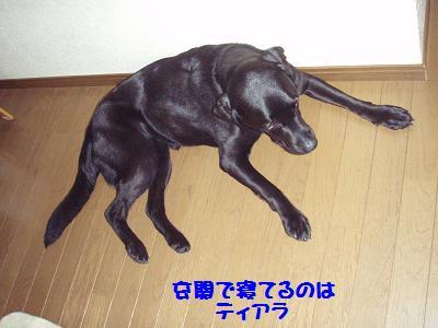 P7020053-2.jpg