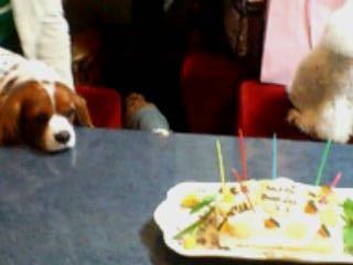ケーキ見つめる
