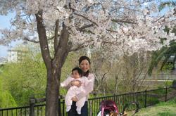 野間大池の桜2