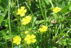 阿蘇 黄色い花