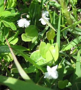 阿蘇 白い花