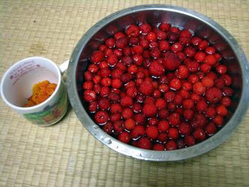 木苺収穫②
