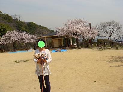 2008年 お花見1