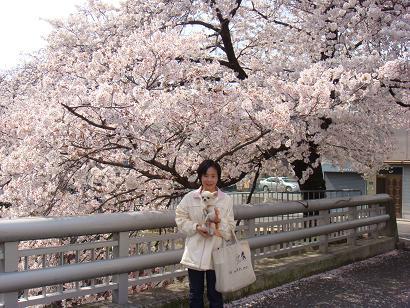2008年 お花見3