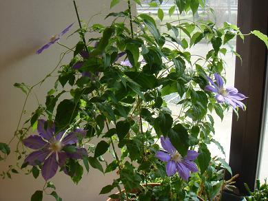 紫色 お花