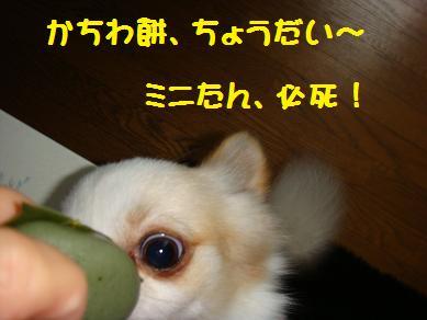 かしわ餅 ミニ1