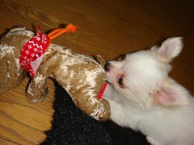 アミちゃん 犬のおもちゃ