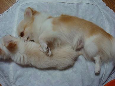 ミニ アミ 添い寝2