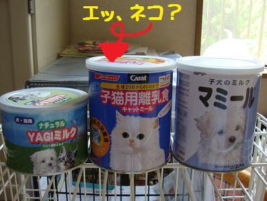 ネコ 離乳食