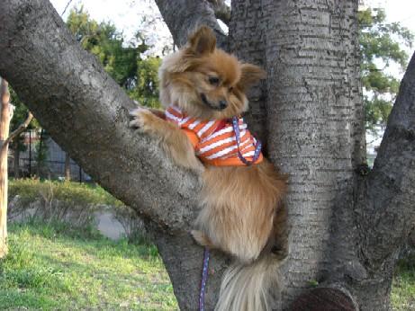 木登りあず男