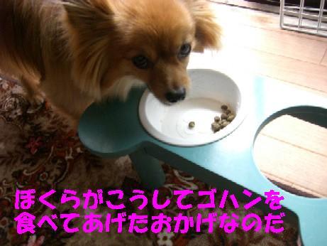CIMG3448.jpg
