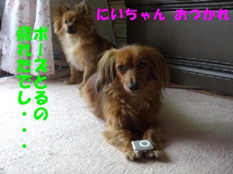 CIMG3464.jpg