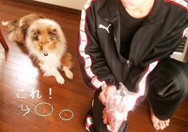ヒロ&チェル 002 - コピー