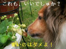 nonchel 009 - コピー