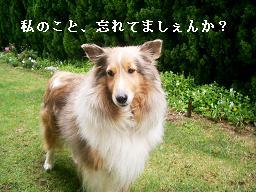 chel 012 - コピー (2)
