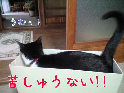 ミ(ノ_ _)ノ=3 ドテッ!