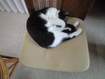 私の椅子…