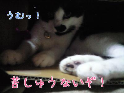Σd(ゝ∀・)イイッ!!