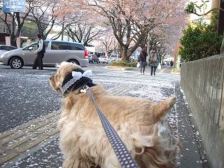 s-アピィとお散歩